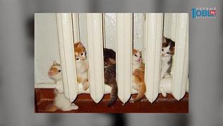 Пушистое утро: Как времена года влияют на кошек