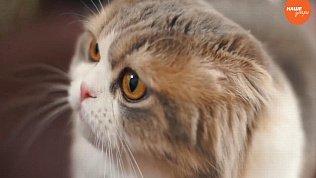 Пушистое утро: Кошки – наша радость
