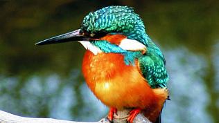 Птица-говорун набирает популярность в интернете