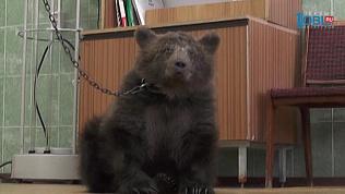 Медвежонка спасли от мучителей в Верхнем Уфалее