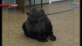 Местный житель уверяет, что спас двухмесячного медвежонка от живодеров