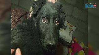 Замерзающего щенка спасли зоозащитники на трассе в Магнитогорске