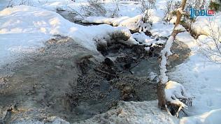Нечистоты загрязняют лесной массив в Сосновском районе
