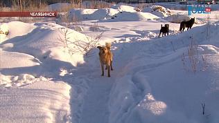 Бродячие псы держат в страхе микрорайон Парковый
