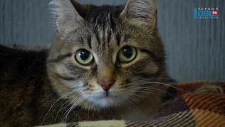 Кота-«экзорциста» за 2,5 миллиона рублей предлагают в Челябинске