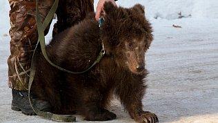 Медвежонок Степа стал автомобилистом
