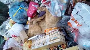 Странное животное с копытами обнаружено в мусорном контейнере Златоуста