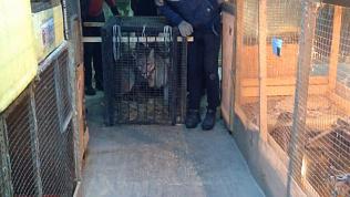 Челябинский зоозащитник Карен Даллакян спас зверей-инвалидов