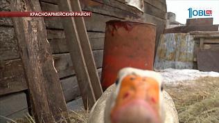 """Южноуральская семья купила корову по программе """"Социальный контракт"""""""