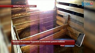 Фермер Владимир Пырочкин о спасении дикого кабана