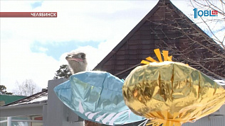 Страусы предсказывают погоду на лето