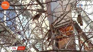 Наше УТРО на ОТВ – сюжет про птичек