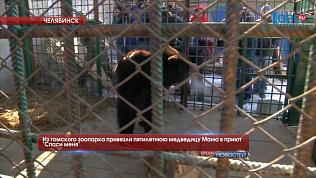 """Из томского зоопарка привезли пятилетнюю медведицу Маню в приют """"Спаси меня"""""""