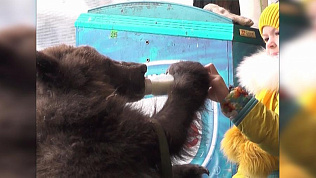 Медвежонок Степа станет опасным для людей в период полового созревания