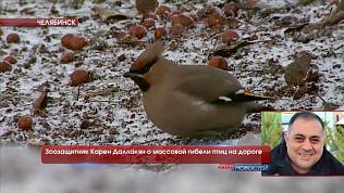 Зоозащитник Карен Даллакян о массовой гибели птиц на дороге