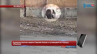 Администратор цирка Сергей Хазов о гуляющем по городу медведе