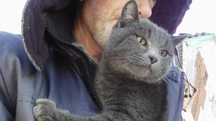 Породистого кота спасли с шестиметровой высоты связисты в Троицке