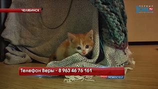 Котёнка, запертого на балконе, удалось спасти