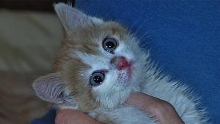 Жители дома по ул.Братьев Кашириных спасли котенка с запертого балкона