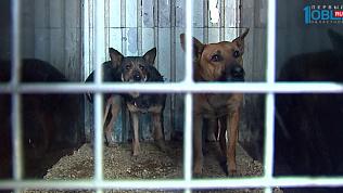 «ГорЭкоЦентр» утилизировал трупы кошек и собак после возмущения зоозащитников