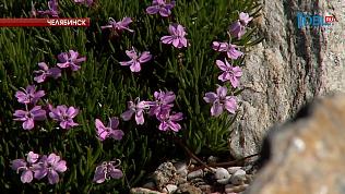 В Ботаническом саду ЧелГУ зацвели растения из Красной книги