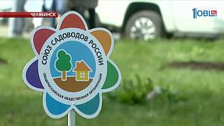 В Курчатовском районе появились кедровые сады
