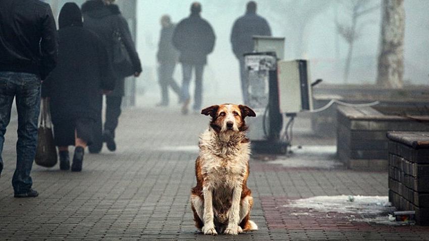 Южноуральские общественники предлагают ввести обязательное чипирование домашних животных