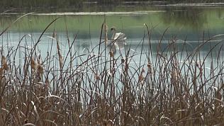 Птичий рай в Еманжелинске