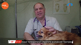 Ветеринар Николай Калинин обнаружил проблемы с ушами у шпица