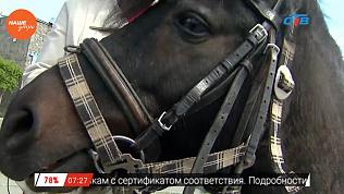 Наше УТРО на ОТВ – пушистое утро о пони (3 часть)