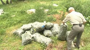 Грибник нашел в лесу тонну овощей