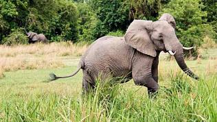 Слон насмерть затоптал посетителя, пытавшегося сделать селфи