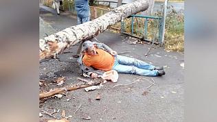В Миассе дерево упало на прохожего и забор детского сада