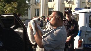 Зоозащитник спас запертых в машине котов