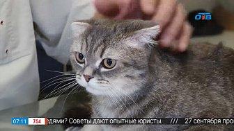 Ветеринар рассказал, можно ли кормить кота влажным кормом