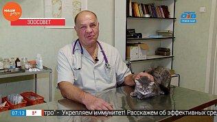 Ветеринарный врач провел профилактический осмотр кота