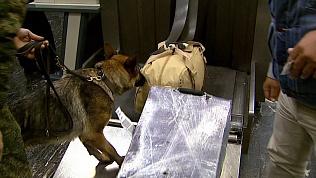 Хвостатая таможня проверила багаж пассажиров на наркотики