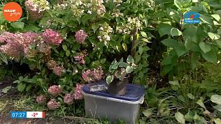 Надежда Черненко расскажет, как перенести в дом садовые растения