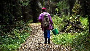 Компания пожилых грибников заблудилась в лесу под Чебаркулем