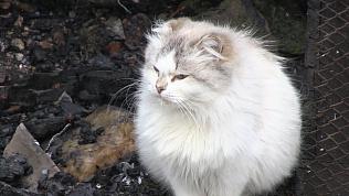 Кот по кличке Борька спас семью от гибели на пожаре в Миассе