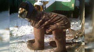 Кусинские мастера сваляли валенки для собак
