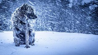 Синоптики прогнозируют настоящие метели на Южном Урале