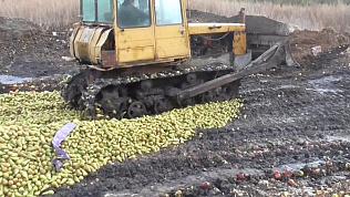 Более 110 тонн сочных яблок и груш вдавили в землю
