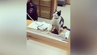 Черно-белый кот принимает звонки в дежурной части ГИБДД