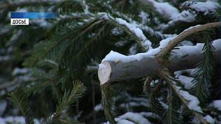 В Челябинске могут создать пункты приема елок