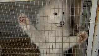 Зоозащитники приехали спасать собак