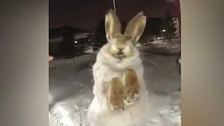 Аномальный холод в Казахстане заживо заморозил уличных животных.18+