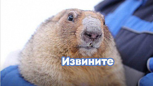 Сурок Соня «проспала» весну на Южном Урале