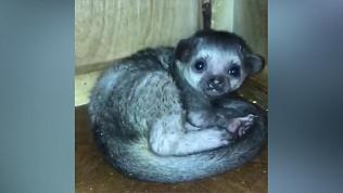 «Медовый медвежонок» родился в челябинском зоопарке