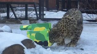 Танки вошли в челябинский зоопарк